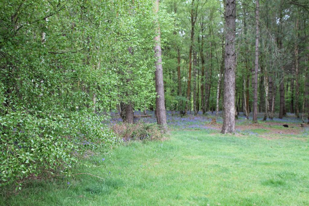 Camping area at Lees Wood