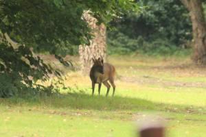Deer Lees Wood
